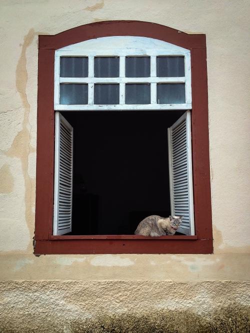 Gato e janela-2076